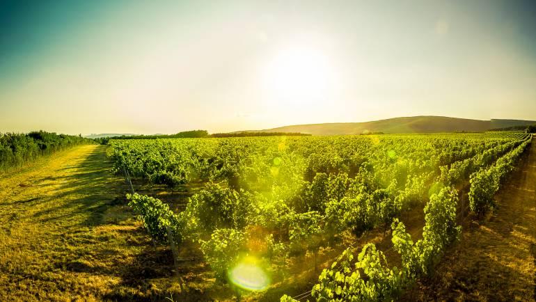Objavte naše víno počas horúcich letných večerov!